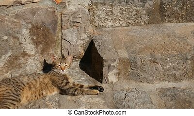 Cats in the old town of Budva, Kotor, Dubrovnik. Croatia and Mon