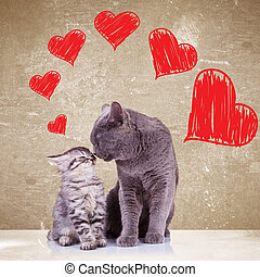 cats kissing on valentines day - in love cats kissing each...