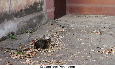 Cats love. Two wild homeless cat on the street lick each other.