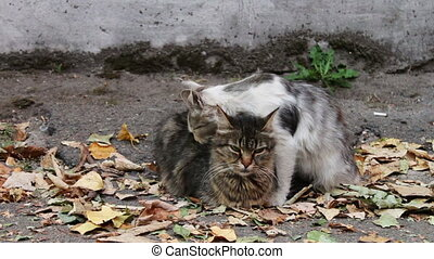 Cats love. Two wild homeless cat on the street lick each...