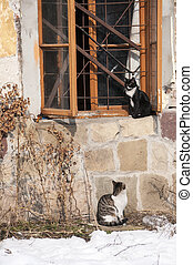 Cats near window of abandoned old wheathered house