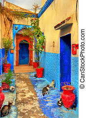 Cats on a street of Kasbah of the Udayas in Rabat
