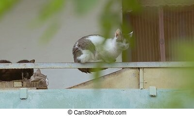 cats on an iron beam balcony slow motion video
