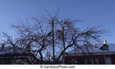 cats on city garden apple treet