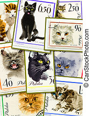 cats on collage
