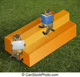 Cats on impossible timber - The two cats are sitting on the...