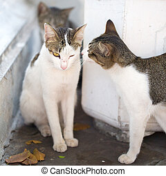 Cats on the streets of Bangkok