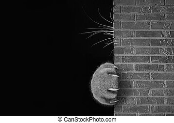 Cat's paw and whiskers behind the wall 2
