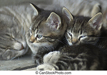 cats kittens relaxing with mom