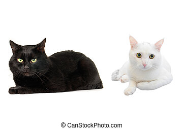 cats - white cats on a white background