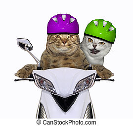 Cats ride a white moped 2
