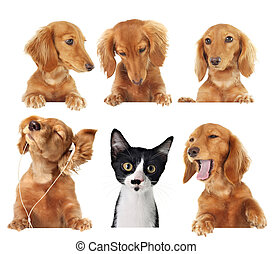 Cats rule! - Funny kitten surrounded by dogs.