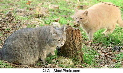 Cats sexual behaviour