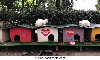 Cats shelter street Antalya small wooden coloured booths -...