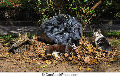 cats sleeping in the leaves, autumn