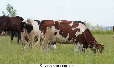 Cattle and horses on green pasture
