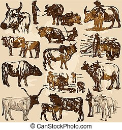 cattle animals - an hand drawn vector pack, collection.