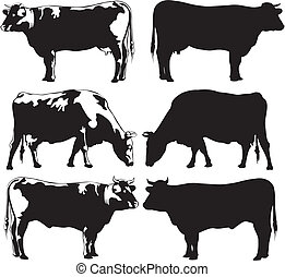 cattle - cow and bull - breeding cattle for meat and milk -...