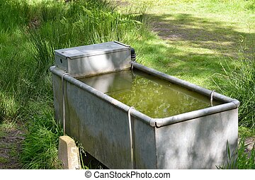 Cattle drinking water trough