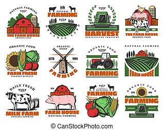 Cattle farm, agriculture farming food products