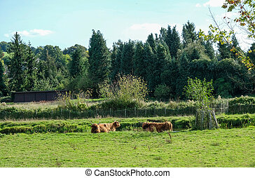 Cattle grazing near a stream - taken on a visit to...