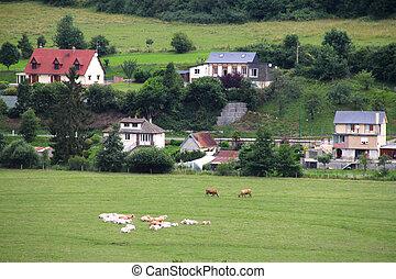 Cattle Grazing on Farmland near Dieppe, Normandy, France