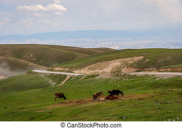 Cattle in scenic kyrgyz mountains