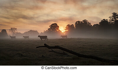 Cattle in the field at sunrise with copy space