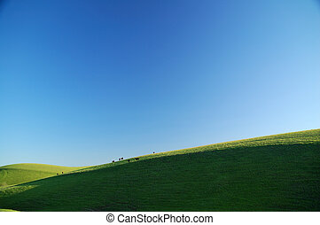 cattle on a sunny hillside - sunny green hillside with...