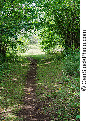 Cattle path in lush greenery in the countryside on the ...