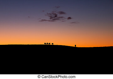 Cattle Silhouette In Sunset