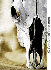 Western-themed cattle skull closeup against a brown background (shallow focus).
