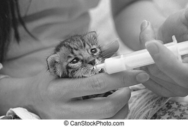 catty - little cat