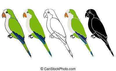 Caturrita bird in profile view - Vector art.