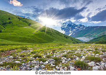 caucase, montagnes., prés, alpin