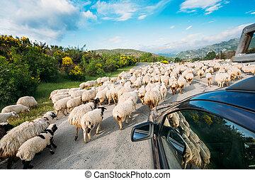 caucase, mouton, géorgie, voiture, dos, fenêtre, en mouvement, troupeau, vue
