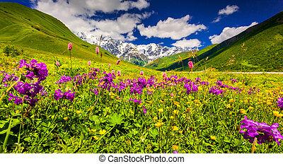 caucase, supérieur, panorama, svan, montagnes., prés, alpin