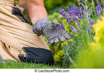 Gardener Taking Care of His Flowers in a Garden
