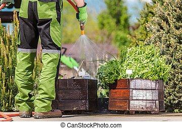 Watering Garden Herbs
