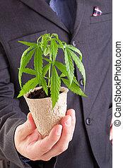 Cannabis business.