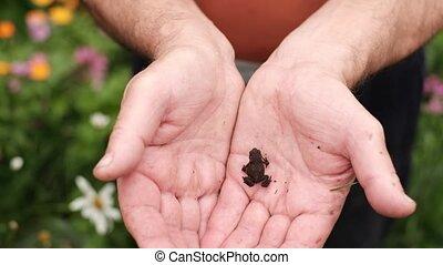 Caucasian man holding small tiny dark baby toad - Caucasian...