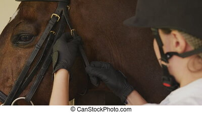 Caucasian woman putting the bridle of the dressage horse - ...