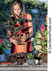 Caucasian young woman transplanting flower pot