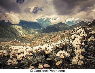 caucasus, bjerge., enge, alpine