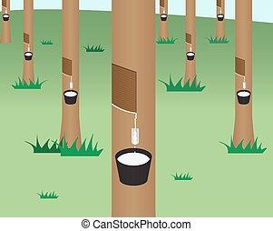 caucho, plano, estilo, árbol, selva