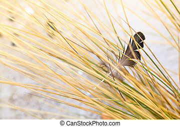 Caught in the Dune Grass