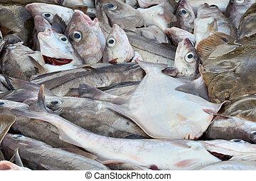 caught, razem, sale., świeża ryba, leżący