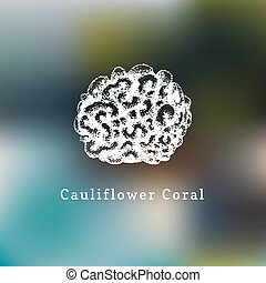 Cauliflower coral vector illustration.Drawing of sea polyp...
