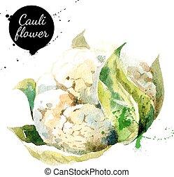 cauliflower., hand, vattenfärg, bakgrund., oavgjord, vit, målning
