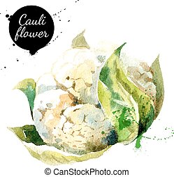 cauliflower., mano, dibujado, pintura de acuarela, blanco, fondo.